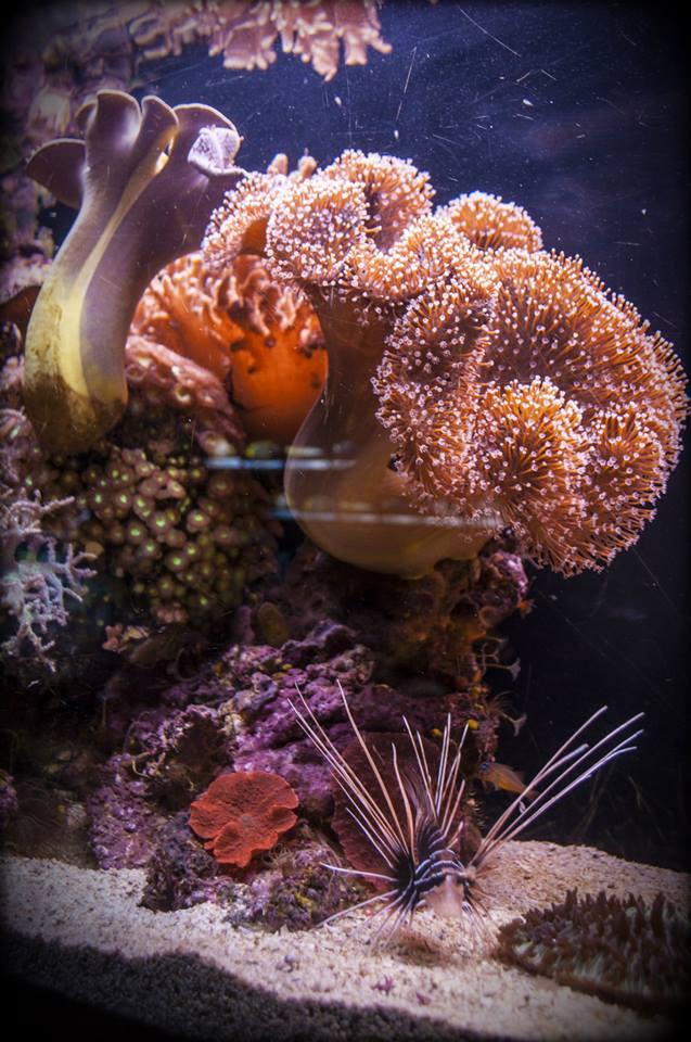Eilati korall zátony