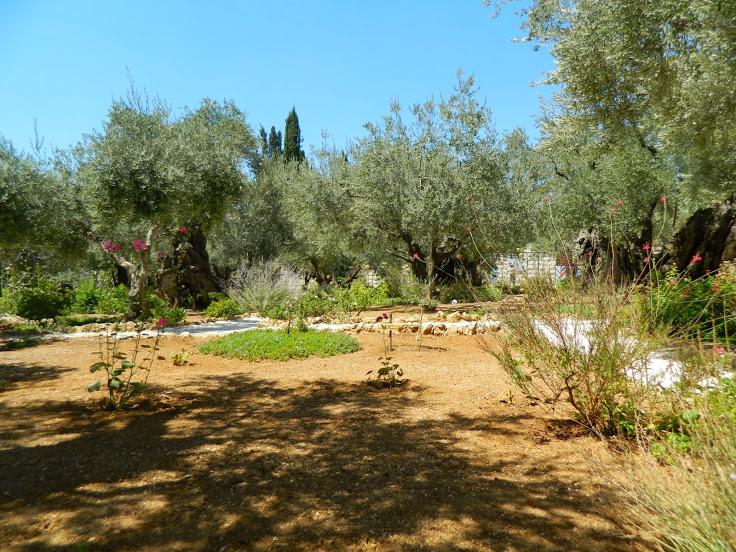 A gecsemáné kert